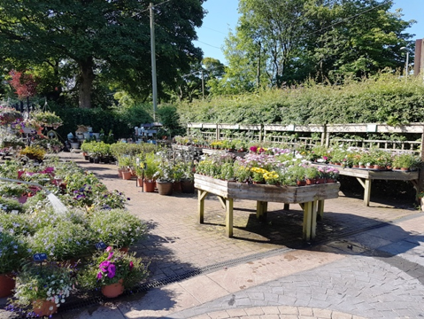 http://www.stakehillnurseries.co.uk/bottom-area3.jpg